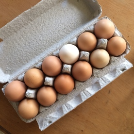 Perfectly motley eggs.