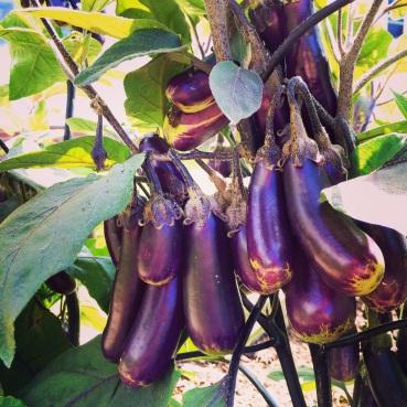 I knew eggplant was beautiful, but I never knew HOW beautiful.