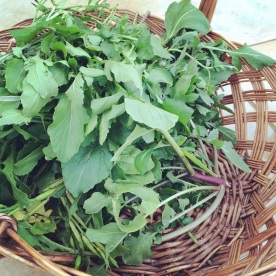 Rocket: picked in the morning and eaten for lunch.