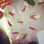 Some impromptu chilli-in-the-bottom-of-the-pickles action.